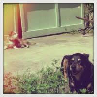 Sedona Monkey sunshine
