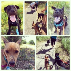 hike dogs