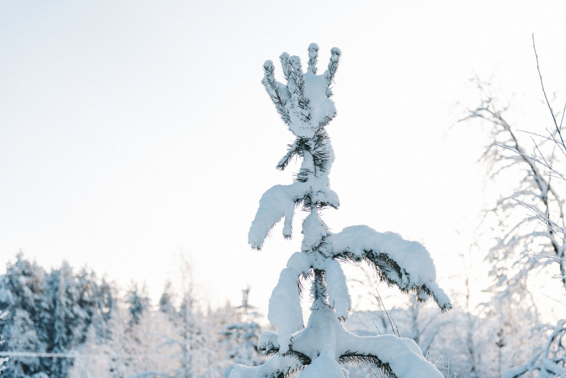 reisefotografie-lappland-finnland-108
