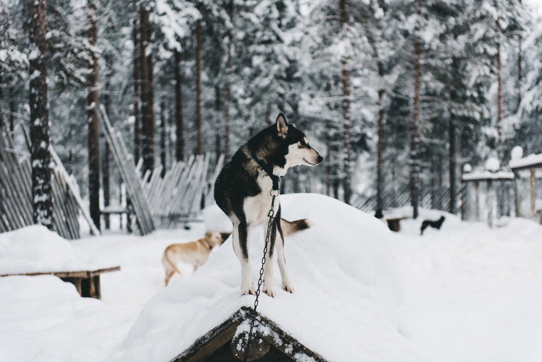 reisefotografie-lappland-finnland-155