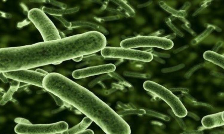HSE warns public as E.coli cases triple