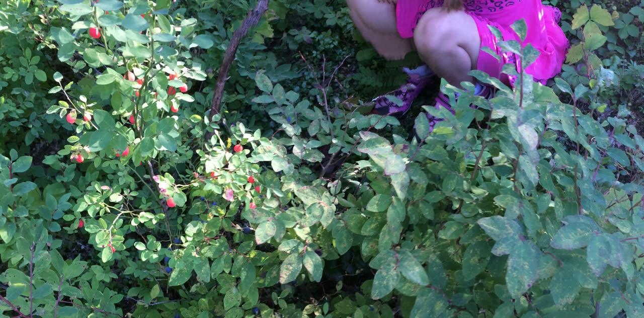 huckleberry2