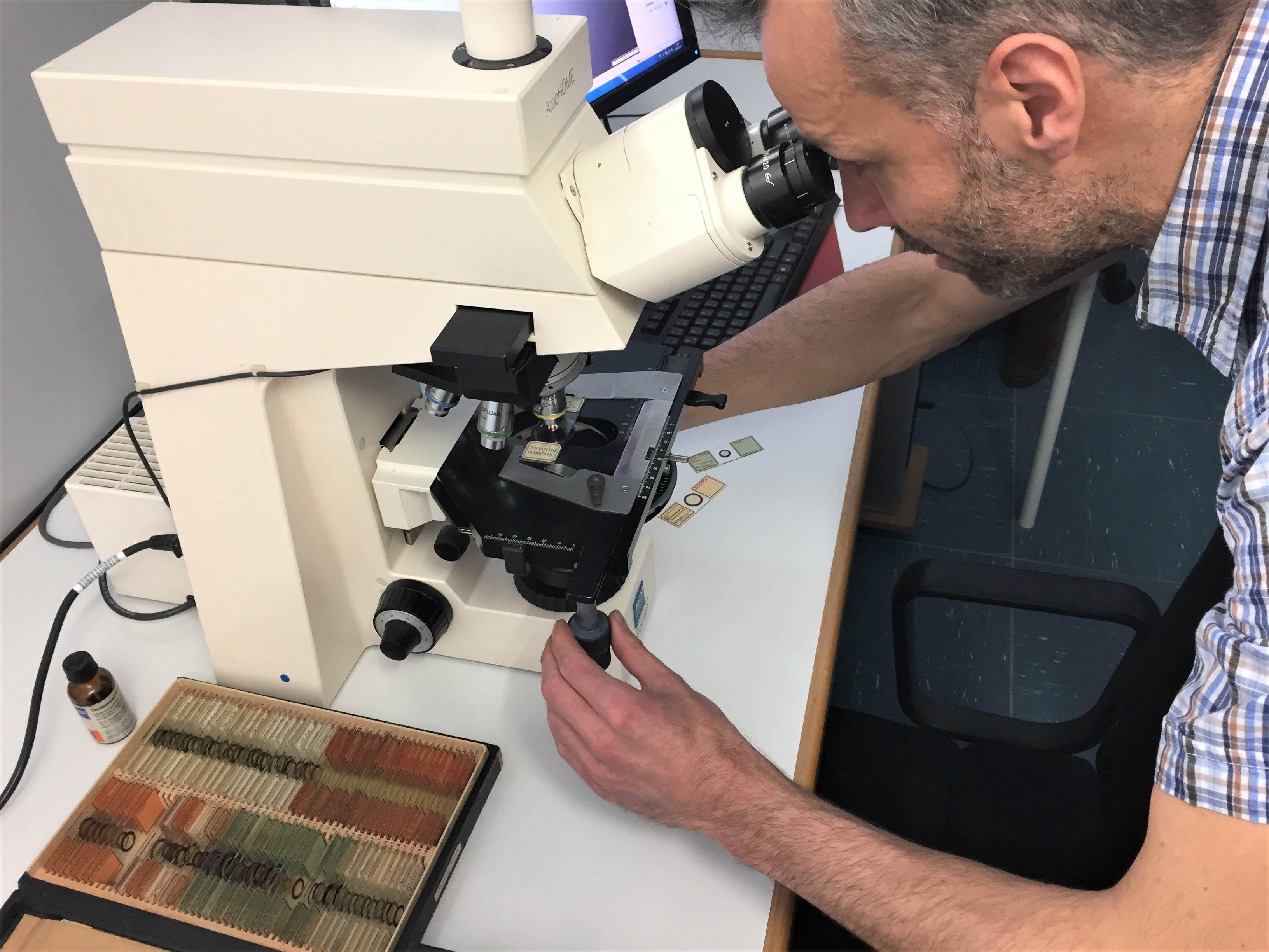 diatoms under the microscope3