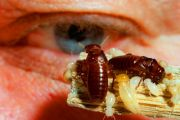 Q&A: Pest-and-building inspections
