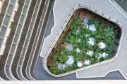 Does Canberra need a green roofs and walls policy?