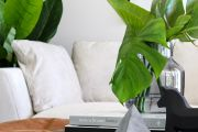 A guide to choosing the perfect indoor plant for each room in your home