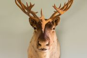 Freaky or fabulous? How I justify having taxidermy at home as an animal-lover