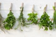 Gardening tips to help you grow all the herbs you'll ever need