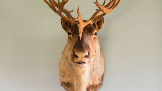 Freaky or fabulous? How I justify taxidermy at home as an animal-lover