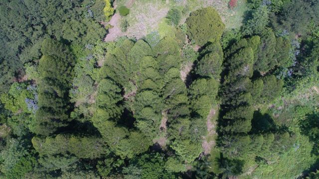 'We need a special person': Reforested labour of love for sale