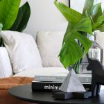 How to choose perfect indoor plant for each room