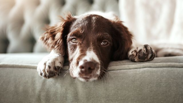 Your garden's best friend: Stop your dog wrecking your backyard