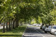 Melbourne's leafy suburbs not always best for open space, study finds