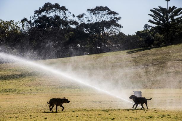 0M5A6339.jpg WATER: A black labrador plays in the sprinklers at Queens Park, Sydney on 30 July 2018. While much of the state is in one of the worst droughts the country has ever seen, water restictions are yet to apply to Sydney siders. Photo: Jessica Hromas
