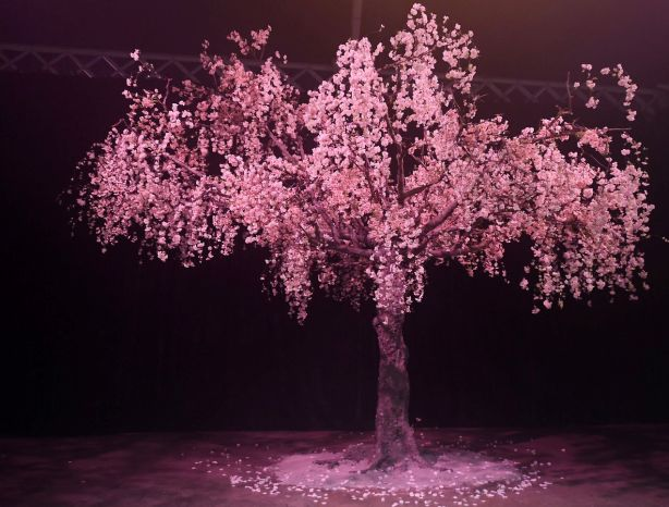 A Cherry Blossom Tree at a Sydney event celebrating Mastery by Crown Group NOT FOR REUSE