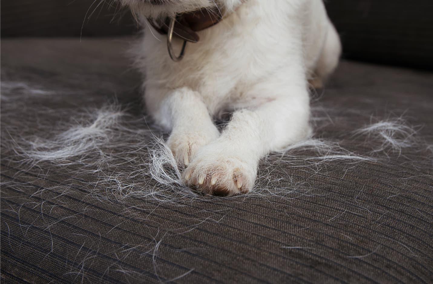 best washing machine for pet hair