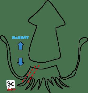 らいおんのぱぱーザリガニのエサ―イカ