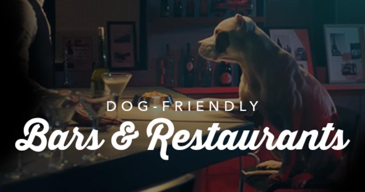 dog friendly restaurants louisville ky