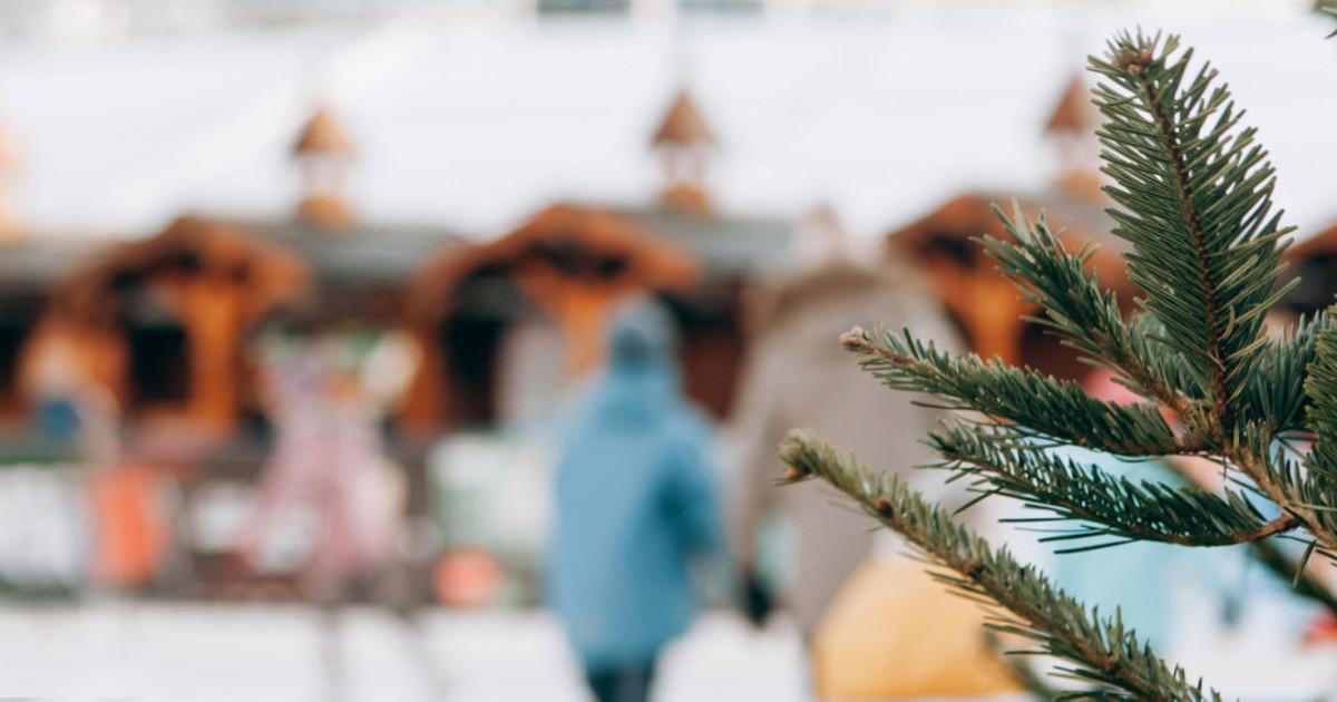 dolas ice skating rink and christmas tree guide