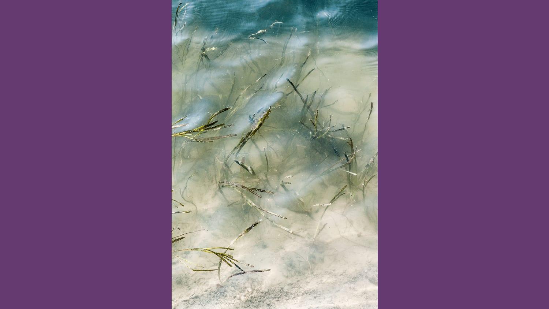 WEB 190904 arroz marino W2 I5615