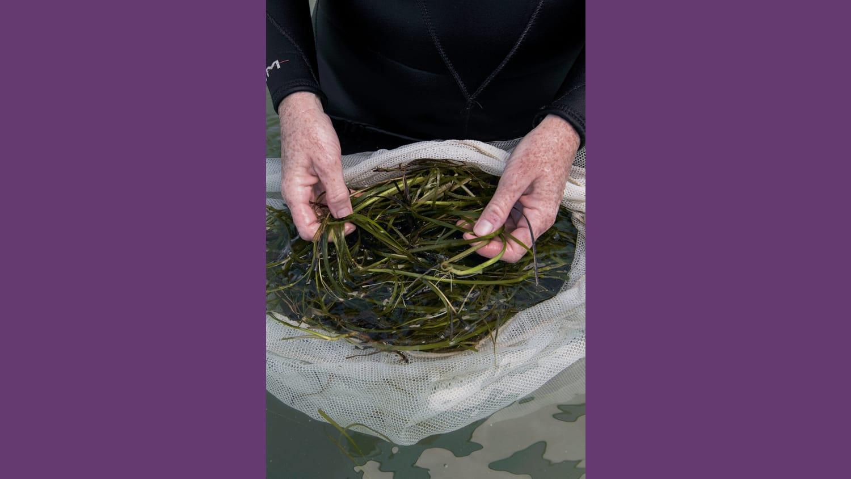 WEB TNC Eel Grass 6 2020 Jay Fleming 38