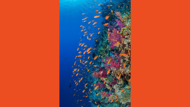 WEB Ocean Agency2