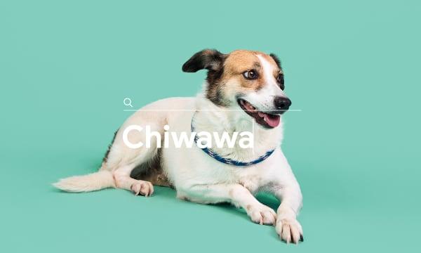 Rescue Dogz