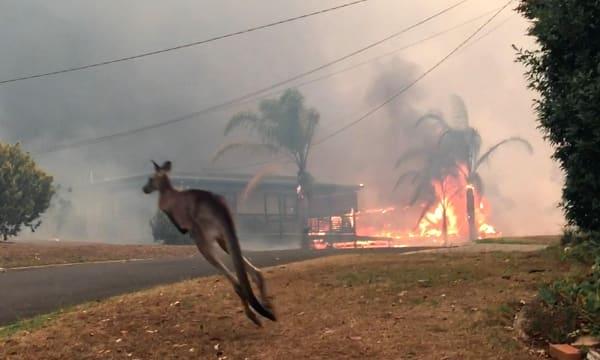 News Kangaroo Oct 8th