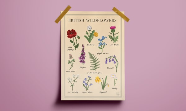 A print with British wild flowers stuck to a wall.