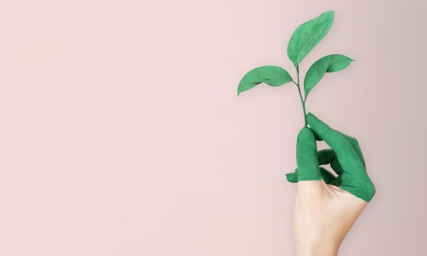 Sustainability in e Commerce