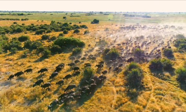 Image of wild bisons running to depict caring for the habitats of all living beings