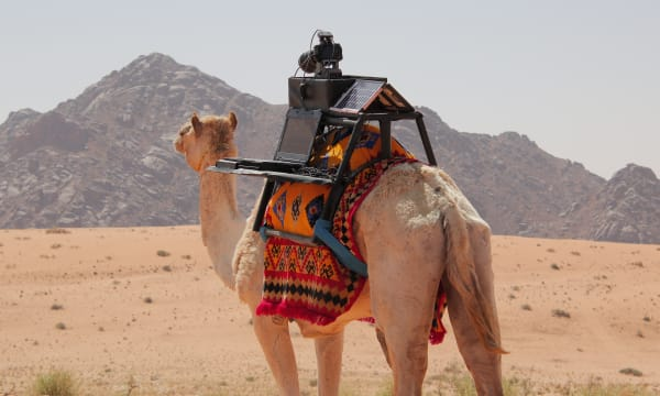 camel in the desert with camera on his back