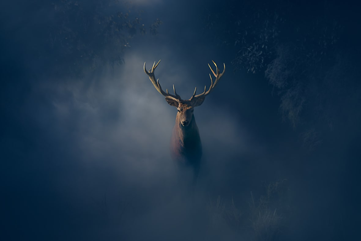 The Stag Hero Image