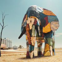 Elephant in the Wheatbelt