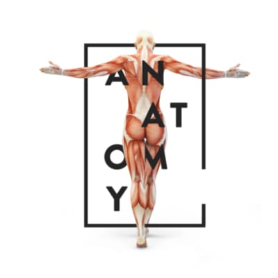 Anatomy of an Agency: If Advertising was a Body, Which Part is Which?