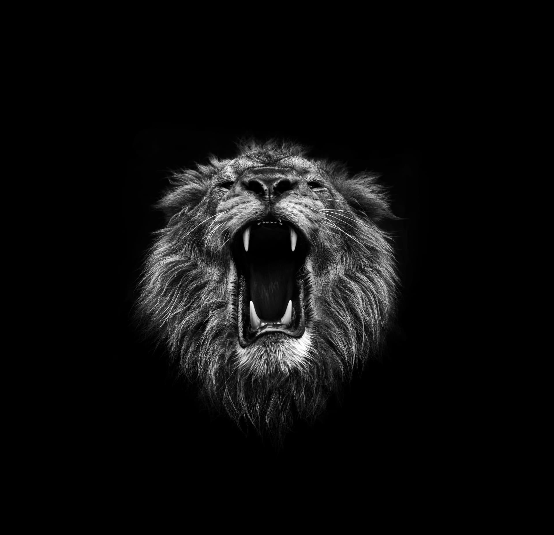 LONDON ZOO LION V03 1