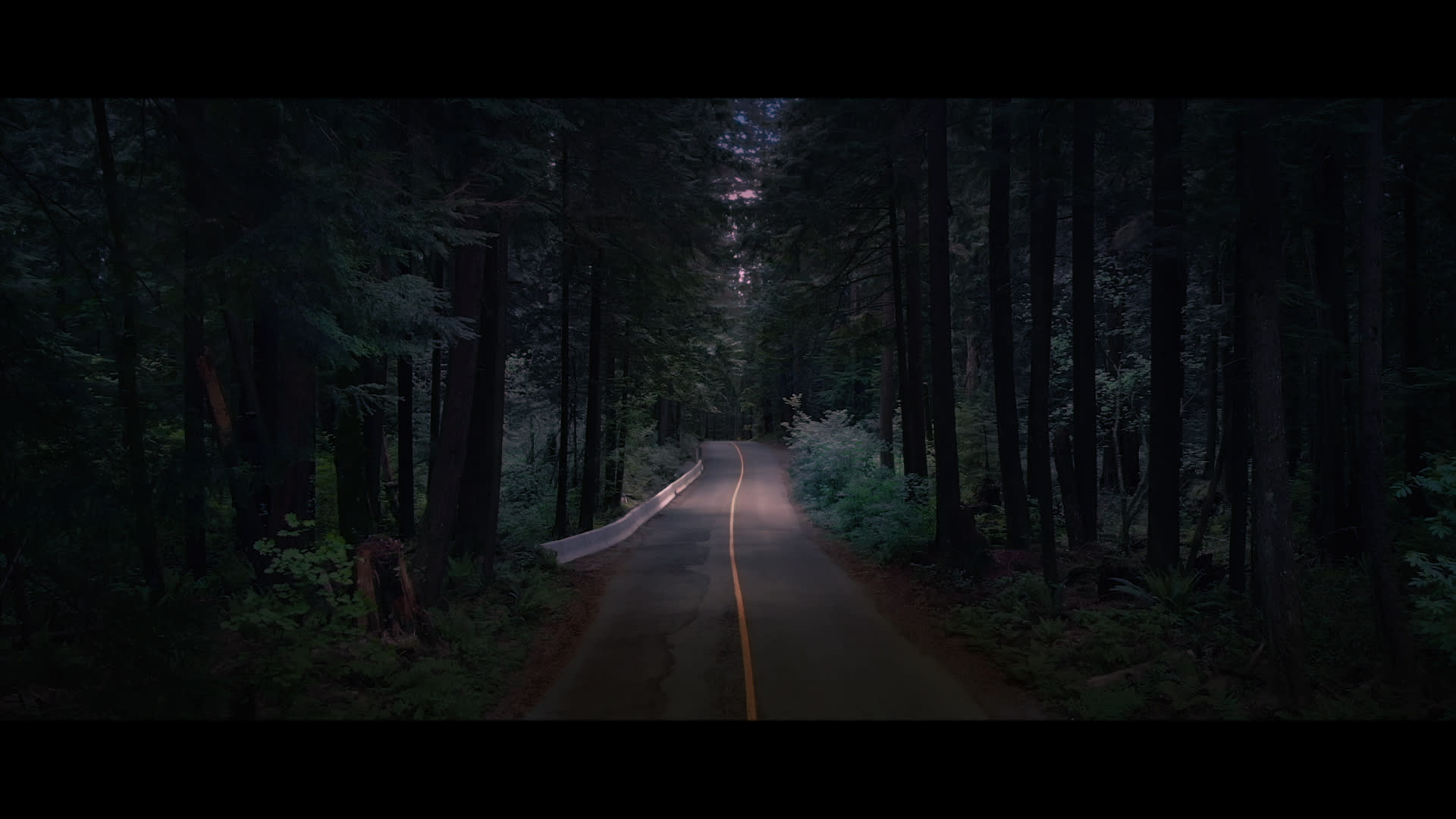 Night scene in a forest with a yellow road line down the middle of it. One spot of the road is highlighted by light.