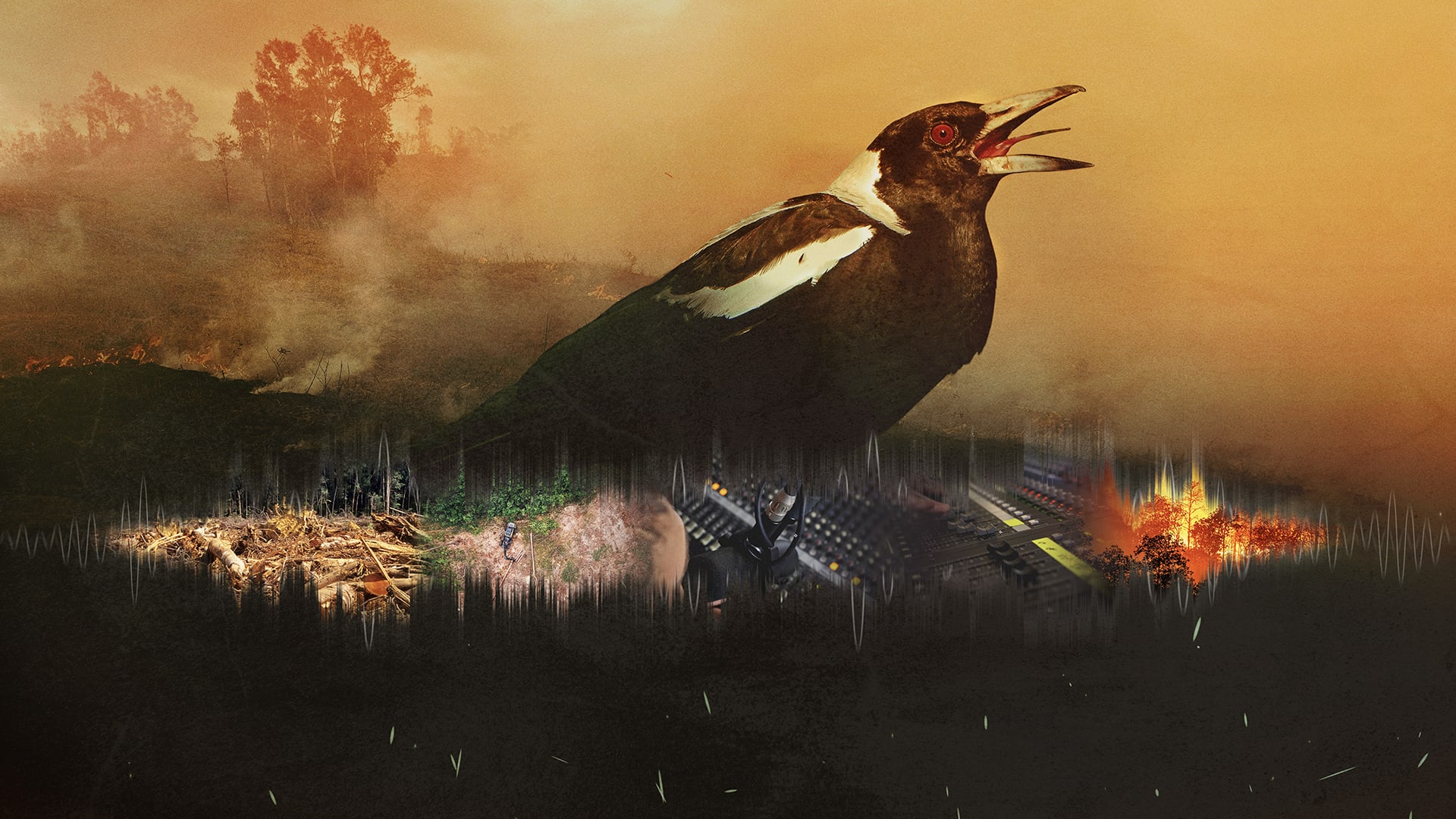 bird in bush fire