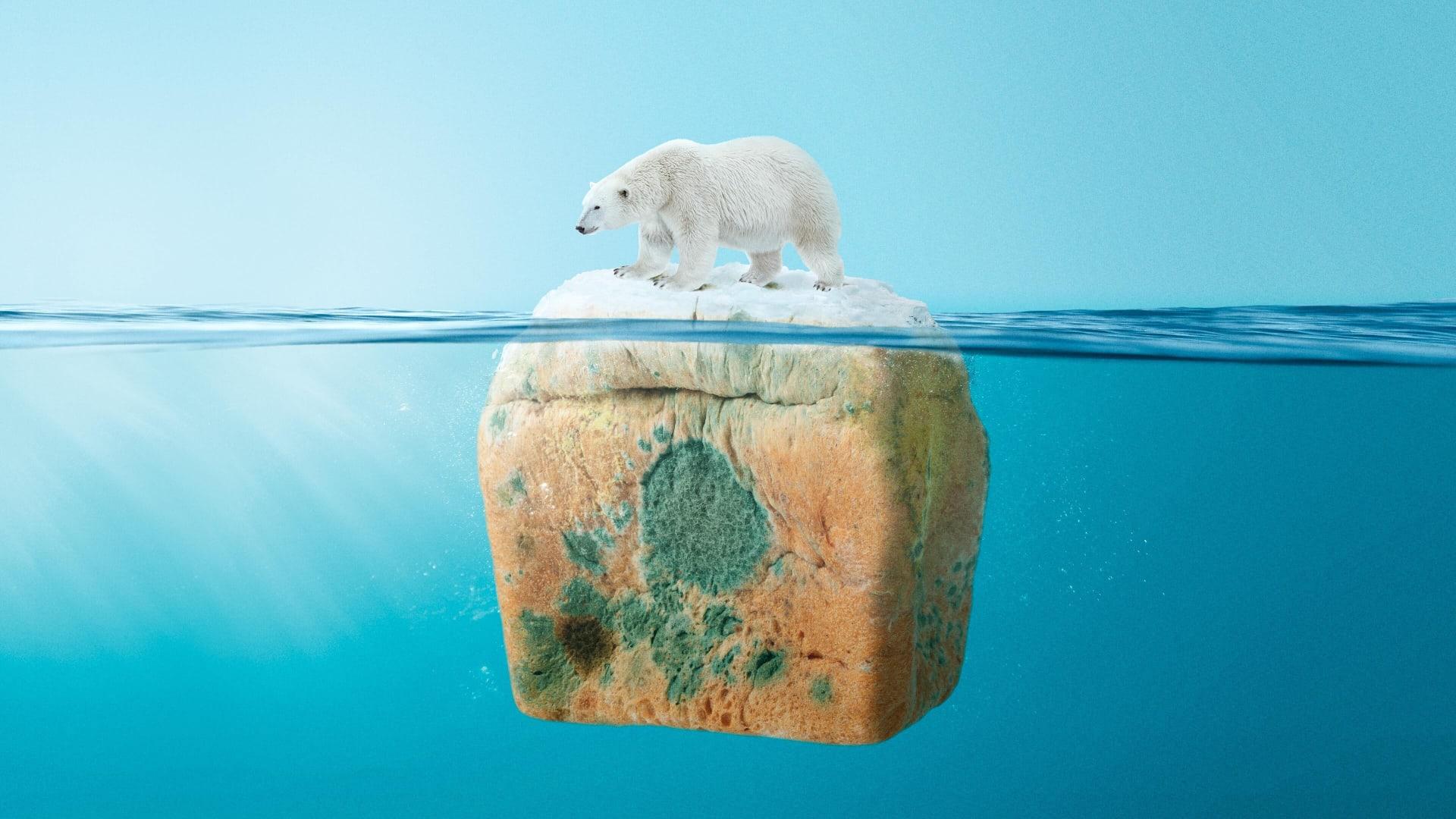 Polar Bear Web