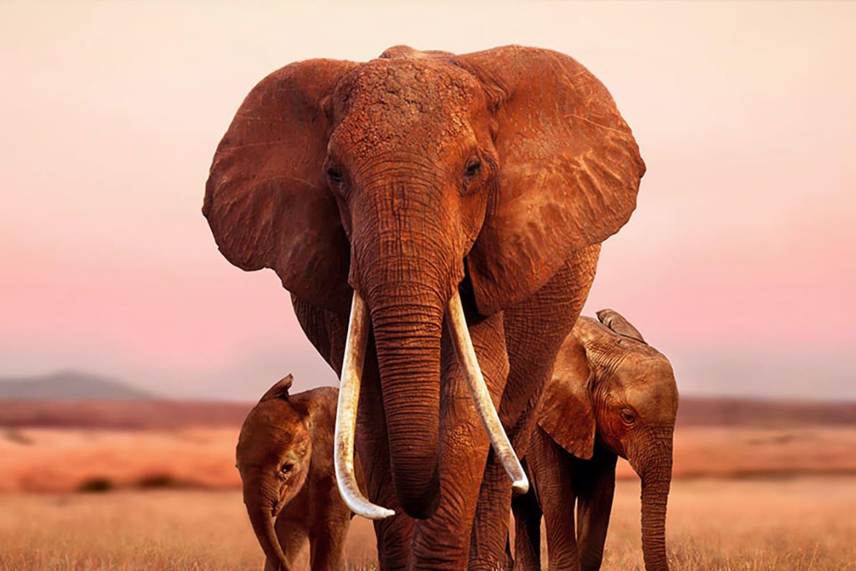 WEB elephant hero