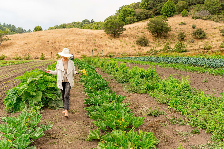 WEB Credit Joseph WEAVER 2020 07 27 Quince At The Farm 58