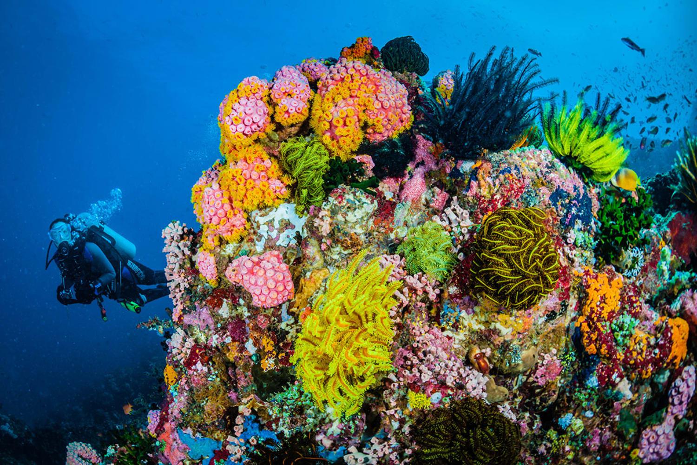 WEB Ocean Agency5 Credit Jett Britnell