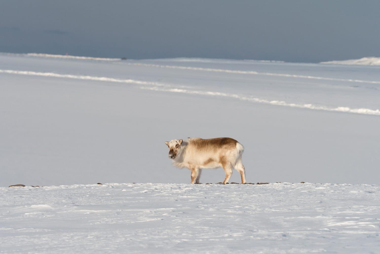 WEB Luxury Action North Pole 2016 12