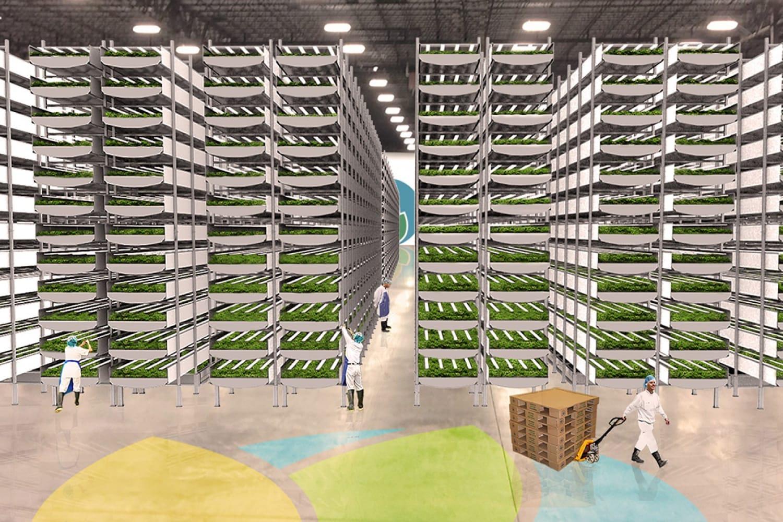 WEB Aero Farms Farm Interior Growing Room