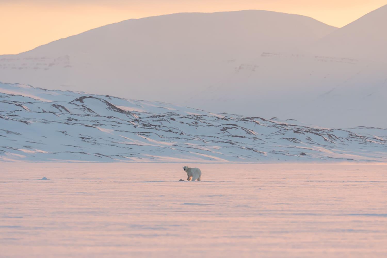 WEB Luxury Action North Pole 2016 5