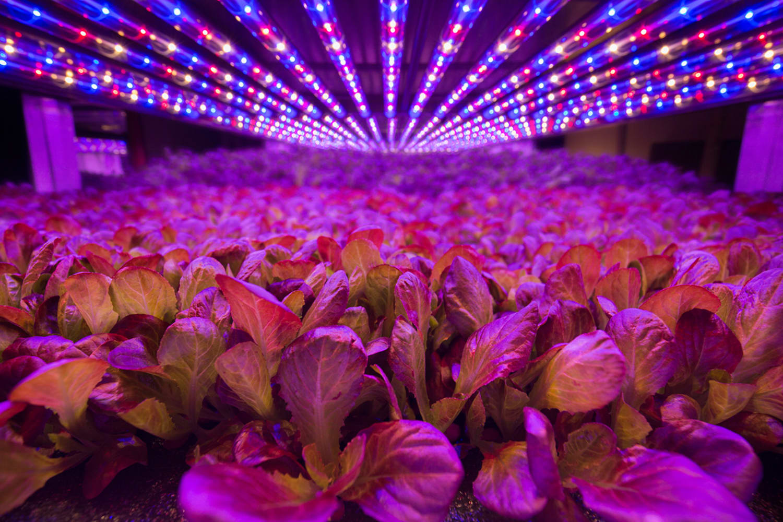 WEB Aero Farms LED3