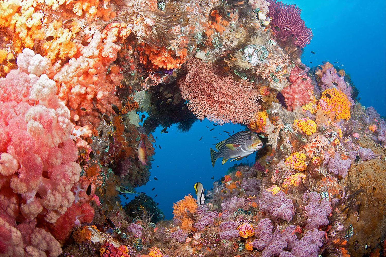 WEB ocean agency jayne jenkins