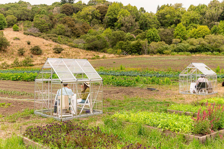 WEB Credit Joseph WEAVER 2020 07 27 Quince At The Farm 41