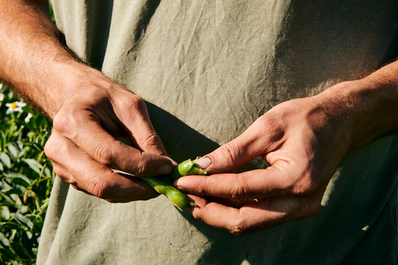 WEB 11 Farms to Feed Us Gothelney Farm image by Scott Grummett 1