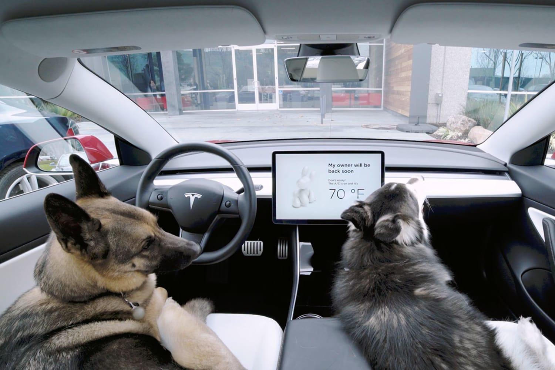 WEB Tesla dog mode